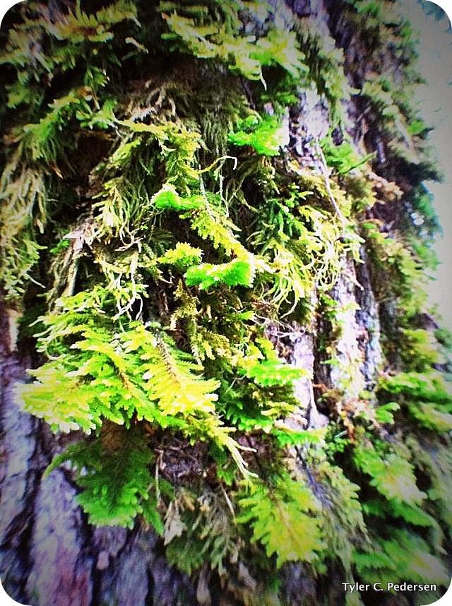 gravitys-greenery